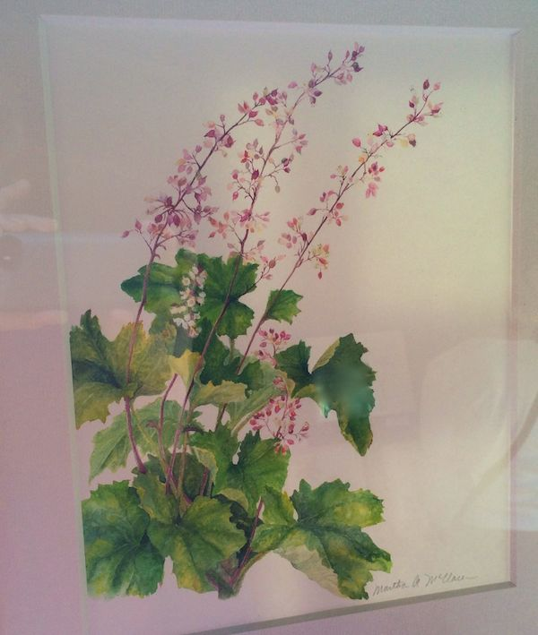 Heuchera Watercolor Martha McClaren