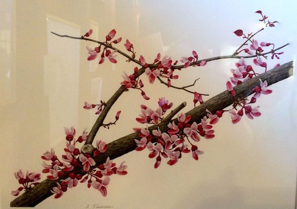 Eastern Redbud Branch Oil on paper Ingrid Finnan