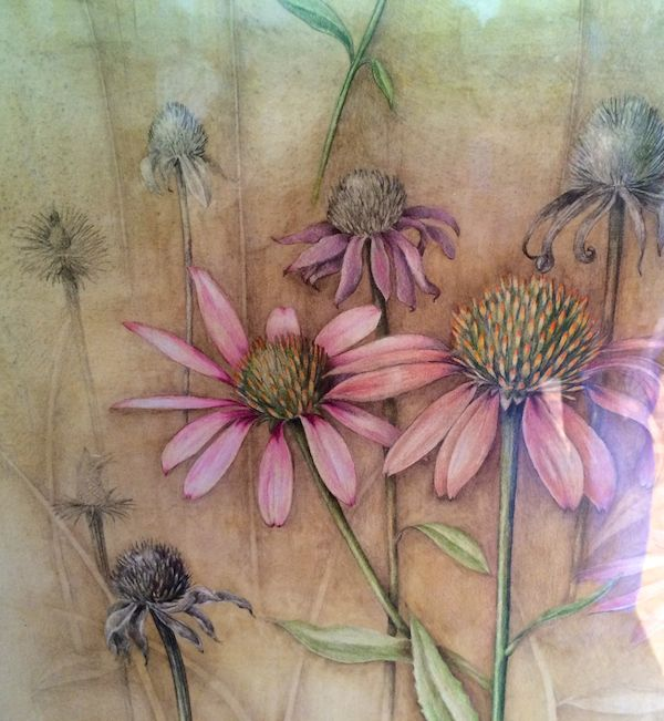 Coneflower Watercolor, colored pencil Wendy Hollender