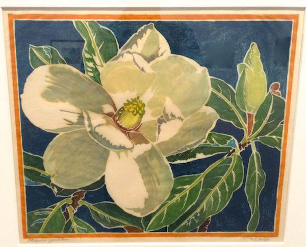 Magnolia Grandiflora c. 1930