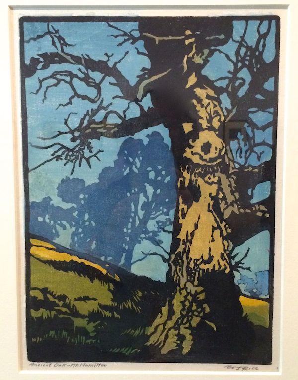 Ancient Oak-Mt. Hamilton c. 1918
